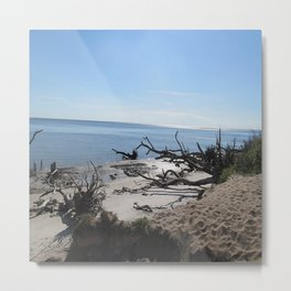 The Boney Trees on the Beach Metal Print