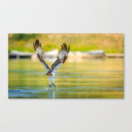 Osprey Lures in a Fish Canvas Print