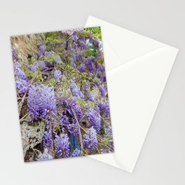Beautiful Wisteria in bloom at garden in Tuscany, Italy Stationery Cards