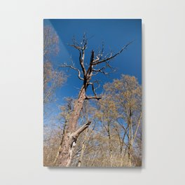 Old dead trunk decayed tree Metal Print
