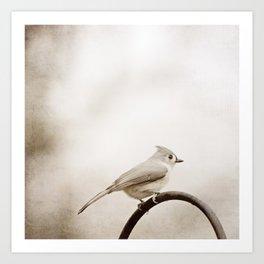 Tufted Titmouse Bird Photography, Neutral Birds Nature Photograph Art Print