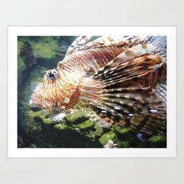 Lion of the Sea Art Print