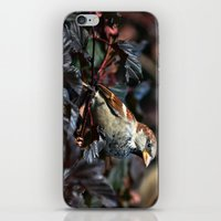 sparrow iPhone & iPod Skins featuring Sparrow by Elaine C Manley