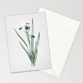 Vintage Tall Bearded Iris Illustration Stationery Cards