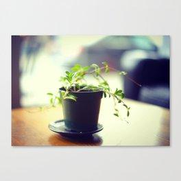 A Pot of Green Canvas Print