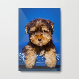 Chocolate Colored Yorkie Puppy Sits in a Blue and White Snowflake Basket Metal Print