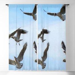 Black Headed Gulls Of The Bosphorus Art  Blackout Curtain