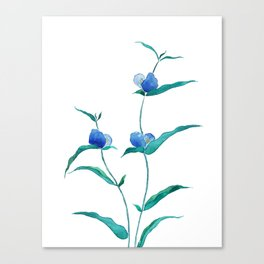 spreading dayflower Canvas Print