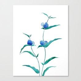spreading dayflower Canvas Print