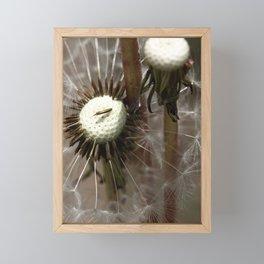 Dandelion 2013 no.7 Framed Mini Art Print