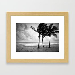 Three Palm Trees Framed Art Print