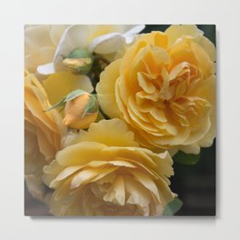 Graham Thomas old fashioned rose Metal Print