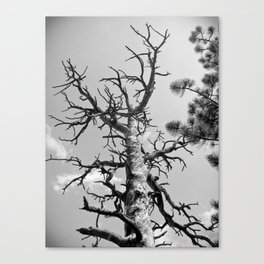 Bare beauty of nature Canvas Print
