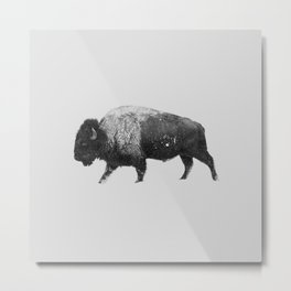 Buffalo, Bison Metal Print