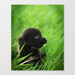 Shelter Puppy Canvas Print