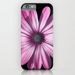 Spectacular African Daisy Isolated On Black iPhone Case