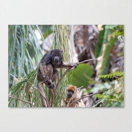 Pair of Howler Monkeys watching Canvas Print