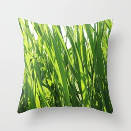 Large reeds leaves in a cane grove Throw Pillow