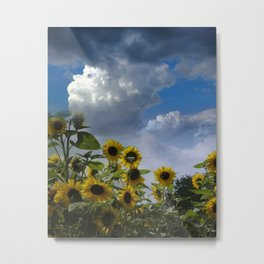 sunflowers and clouds -3- Metal Print