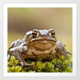 Portrait of a common frog Art Print