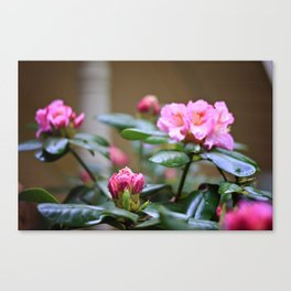 Pretty in Pink2 Canvas Print