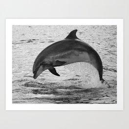 Jumping wild bottlenose dolphin black and white Art Print