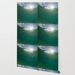 Sardine School Wallpaper