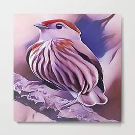 The Striped Manakin Metal Print