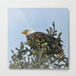 On the Lookout! Metal Print