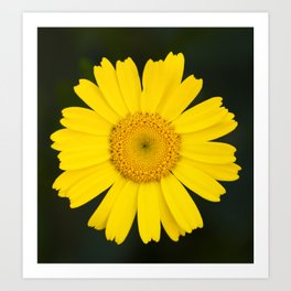 field flower Art Print