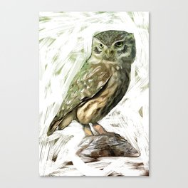 Olive Owl Canvas Print