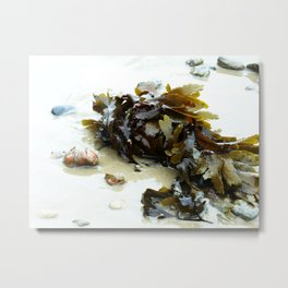 Seaweed on the Beach Metal Print