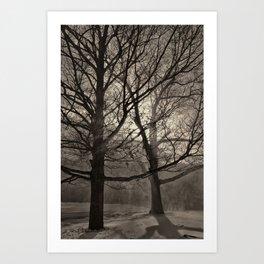 Snow Drifting with Large Trees, Bristol  2013 Art Print
