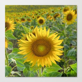Sunflower. Summer dreams Canvas Print