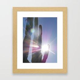 Cacti in the sunlight Framed Art Print