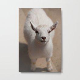 Little Goat Metal Print