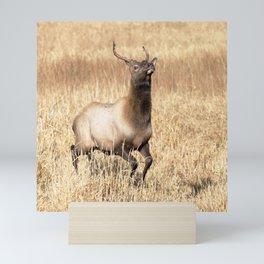 Watercolor Elk Juvenile 15, Prancer Mini Art Print