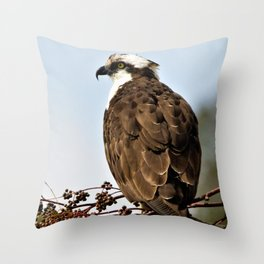 Magnificent Osprey Raptor by Reay of Light Throw Pillow