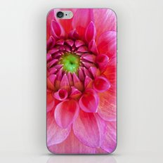 Pink Dahlia -1 iPhone Skin