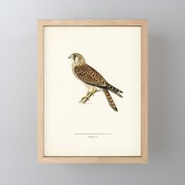 Common Kestrel (Falco tinnunculus) illustrated by the von Wright brothers Framed Mini Art Print