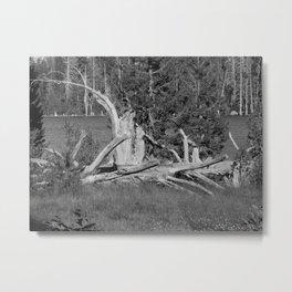 road trip, wood pile, snag by the lake Metal Print