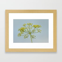 Dill 6177 Framed Art Print