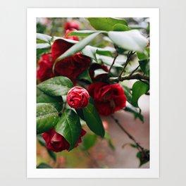 Red Floral I Art Print