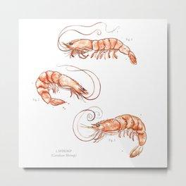 Shrimps 2014 Metal Print