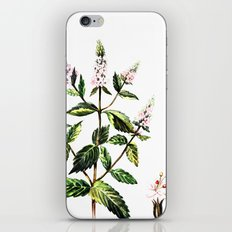 watercolor peppermint iPhone & iPod Skin