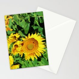 Baby Sunflowers Stationery Cards