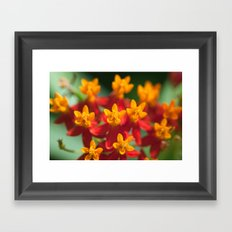 Exotic Flower  411 Framed Art Print