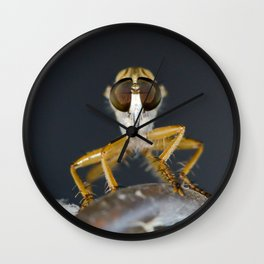 Close up macro of a Robber Fly - Efferia albibarbis Wall Clock