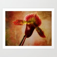 Ruby Lady Slipper Orchid Art Print
