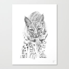 On the Prowl :: A Young Bobcat Canvas Print